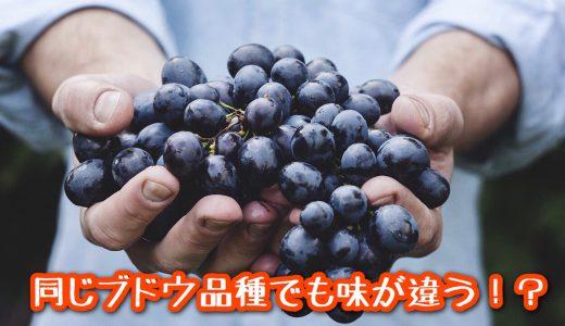 違う味になる理由《同じブドウ品種でも味が違う!?》