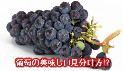 八百屋やスーパーで使える! 《葡萄の美味しい見分け方!?》