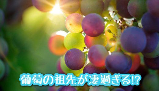葡萄はこうやって現在の姿に!?《葡萄の祖先が凄すぎる!?》