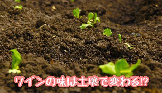 作物は土からは葡萄も例外ではない! 《ワインの味は土壌で変わる!?》
