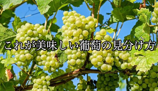 今が旬!美味しい葡萄の見分け方を知ろう!