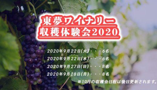 【必見!!】東夢ワイナリー収穫体験会募集中!!気になる【2020年】の【葡萄】の仕上がりはいかに!?