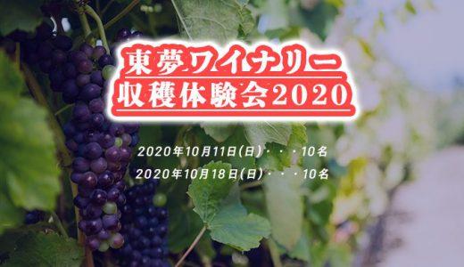 【10月日程更新】東夢ワイナリー収穫体験会募集中!!気になる【2020年】の【葡萄】の仕上がりはいかに!?