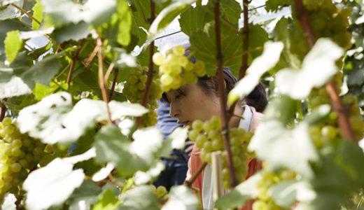 【必見!!】山梨ワインが世界TOP10入り!!ランクインしたワインを造るワイナリーは木村拓哉や稲垣吾郎も訪れたあのワイナリー!?