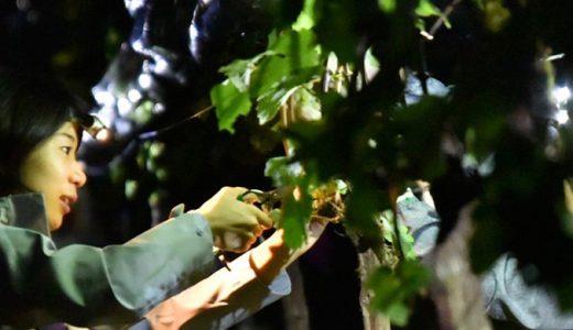 【山梨ワイナリー特集】葡萄収穫の新手法【ナイトハーヴェスト】を導入しているワイナリー